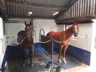 Horse wash at Lambley House